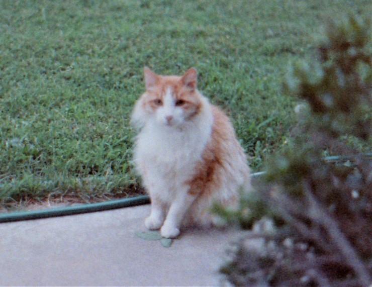 TaffyThe Majestic Watch-Cat